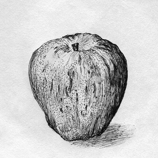 Gravenstein Apple ink drawing.